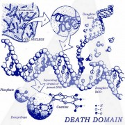 Death Domain -  Ethidium Bromide